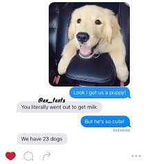 Dog Girlfriend Meme - yesterday my girlfriend decided she wanted a puppy album on imgur