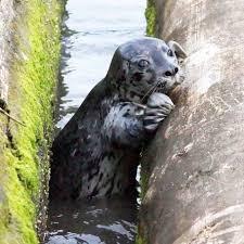 island wildlife natural care centre marine mammal rescue home