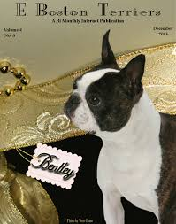 e boston terriers december 2013 edition by e dogmagazines issuu