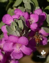 recharge your faith in gardens central texas gardener