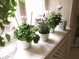 Interior Design With Flowers Eco Friendly Interior Design With Plants And Flowers Inside The