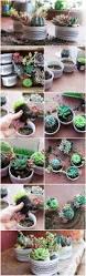 140 best succulents images on pinterest succulents garden