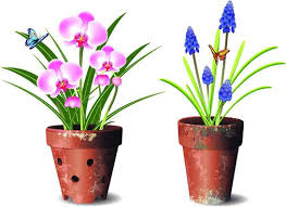 Design For Indoor Flowering Plants Ideas Plant Pot Design Plant Pot Designs Aciarreview Info
