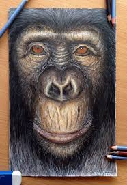 the 25 best coloured pencil drawings ideas on pinterest color