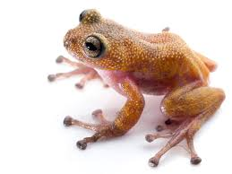 new species pink and yellow frog with spikes u2013 national