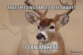 Deer Meme - optimistic deer meme picture webfail fail pictures and fail videos