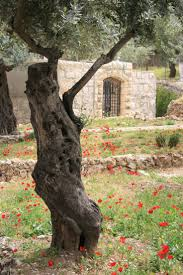 167 best where jesus walked images on pinterest jerusalem israel