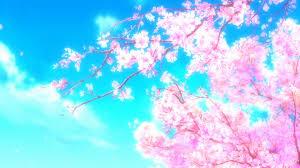 cherry blossom desktop wallpapers wallpaper hd wallpapers