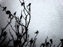 black and white halloween background black bird halloween background free stock photo public domain