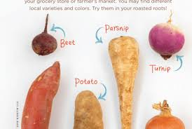 what are root vegetables