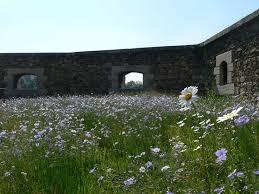 50 best landscape meadows images on pinterest gardens