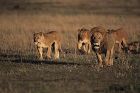 wildlife and exotic animals animals