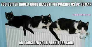Funny Memes Cats - cats always need good reasons to wake up funny cat meme