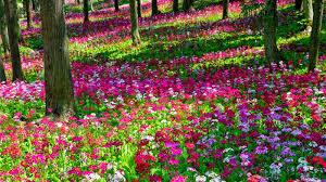 Rose Garden Layout by Beautiful Flower Garden Wallpapers Wallpapersafari