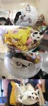 the dim dim bubble bowl a hanging transparent cat bed that gives