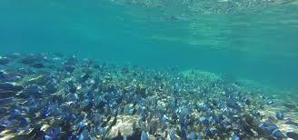 Florida Snorkeling images Snorkeling not just for wimps key largo 39 s john pennekamp coral png