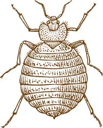 How To Get Rid Of Bed Bugs In Mattress How To Get Rid Of A Mattress Infested With Bed Bugs Organizing