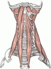 Human Anatomy Anterior 1555 Best Anatomía Images On Pinterest Human Anatomy Medicine
