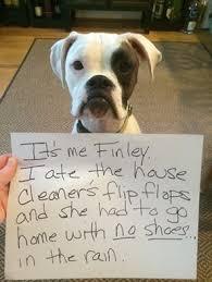 43 Best Funny Images On - 43 best funny dog memes images on pinterest funny dog memes funny