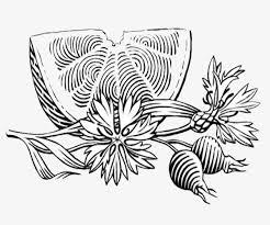 imagen blanco y negro en illustrator blanco y negro yuca comida illustrator blanco y negro yuca