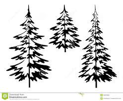 black and white pine tree outline sketch coloring page botanic