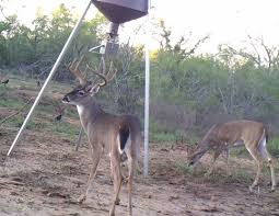 Boss Deer Blinds Prices Category Deer Blinds Map My Ranch