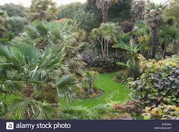 Ventnor Botanic Gardens Palm Garden Ventnor Botanic Garden Isle Of Wight Uk Stock Photo