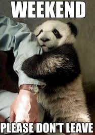 Funny Panda Memes - 30 of the funniest and cutest panda memes on the web i can has