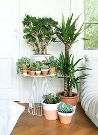 plantes dépolluantes chambre à coucher plantes pour chambre bien etre maison plante pour une chambre