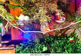 garland fir lights stock photos garland fir