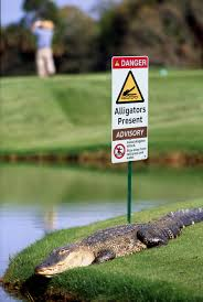 alligator signs and protecting people in public places clarion