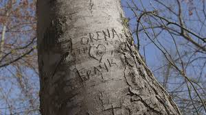 initials carved in tree initials carved into tree in forest with heart stock