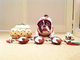 french bulldog christmas movie youtube
