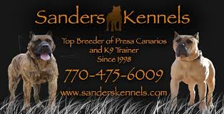 american pitbull terrier in bangalore presa canario puppies and breeder sanders kennels