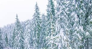 winter frosty christmas forest falling snow stock footage video