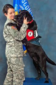quanto vive in media un american pitbull terrier working dog falcon with 2nd lt amber garfoot is assigned to the