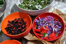 cuisine plantes sauvages cueillettes et cuisine sauvage en auvergne aluna voyages