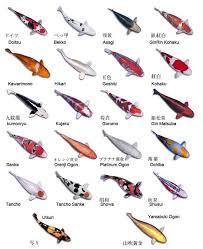 Koi Fish Tattoos Meanings 49 Best Koi Images On Koi Ponds Fish And Koi