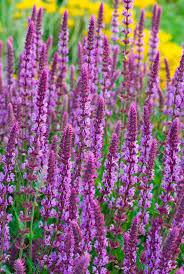 445 best plants u0026 flowers u003c3 images on pinterest plants