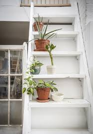 tips for filling your home with indoor plants