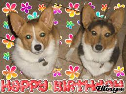 Corgi Birthday Meme - corgi birthday gif 1 gif images download