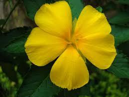 tropical garden flowers ayala alabang manila philippines 003