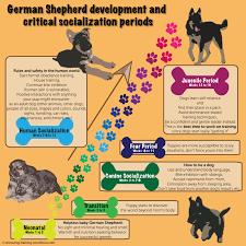 training a australian shepherd puppy german shepherd puppy training guide