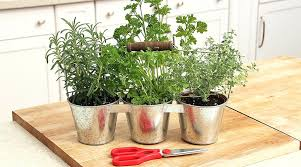 lights to grow herbs indoors how to grow herbs indoors over the winter season growing herbs