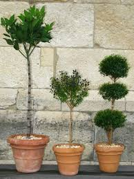 Ny Topiary - 729 best decorate with topiaries images on pinterest topiaries