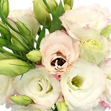 Wedding Flowers For September Kiss Of Blush Lisianthus Flower For June To September Delivery