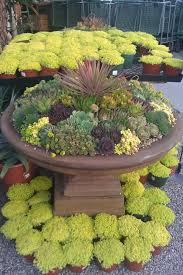 succulents types care maintenance with photos