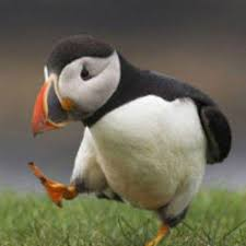 Unpopular Opinion Meme - unpopular opinion puffin know your meme