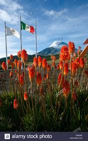 volcano flowers flowers and flags at the base c of iztaccihuatl volcano in