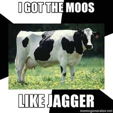 Cow Memes - all memes gather hither videos images art lodecentral